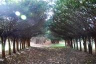 Allée, Ames Gate Lodge, North Easton, MA