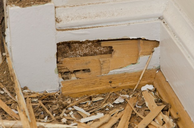 The baseboard trim was also about 80-90 gone, but the nice ogee decoration at the top had its shape preserved by numerous layers of paint.